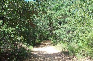 5K Trail