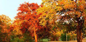 Autumn at Wildwood